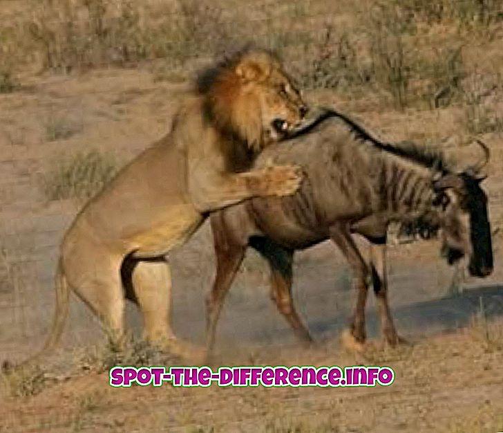 разлика између: Разлика између Предатора и Преи