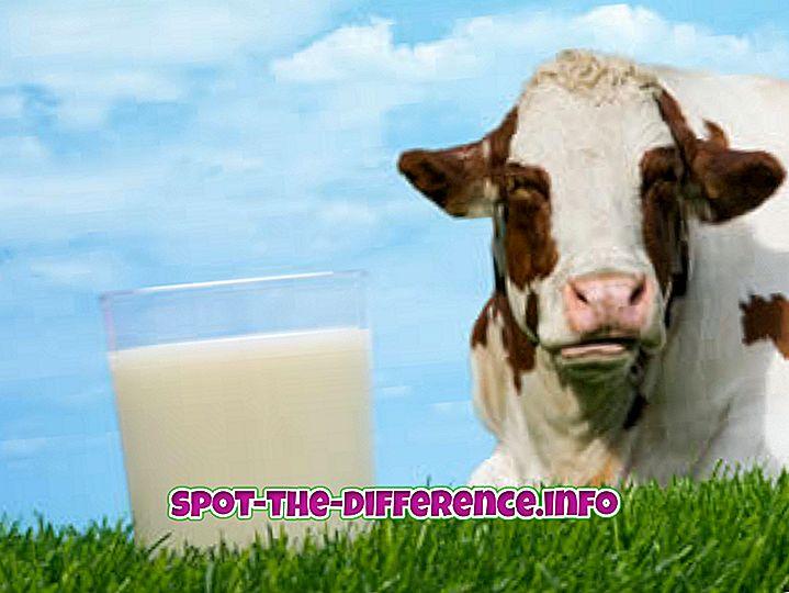 ความแตกต่างระหว่าง: ความแตกต่างระหว่างนมถั่วเหลืองและนมธรรมดา
