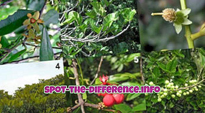 Verschil tussen plantkunde en zoölogie