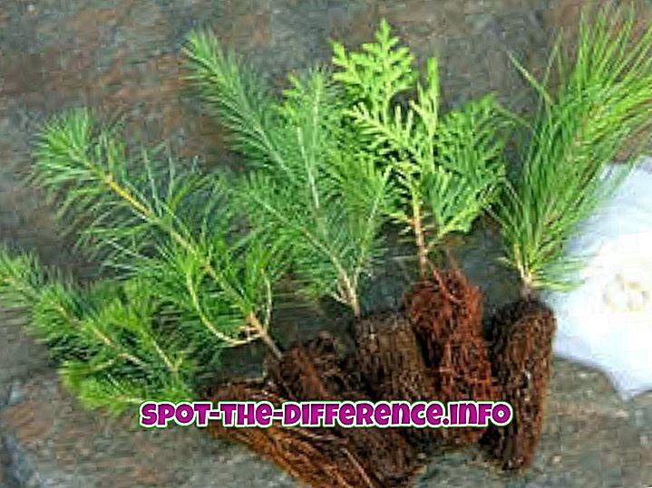 διαφορά μεταξύ: Διαφορά μεταξύ σποράς και φυτευτήρων
