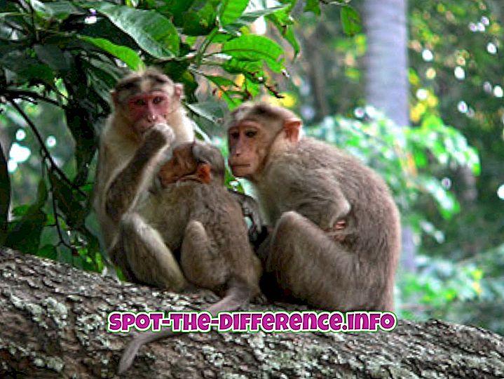 différence entre: Différence entre le singe et le babouin