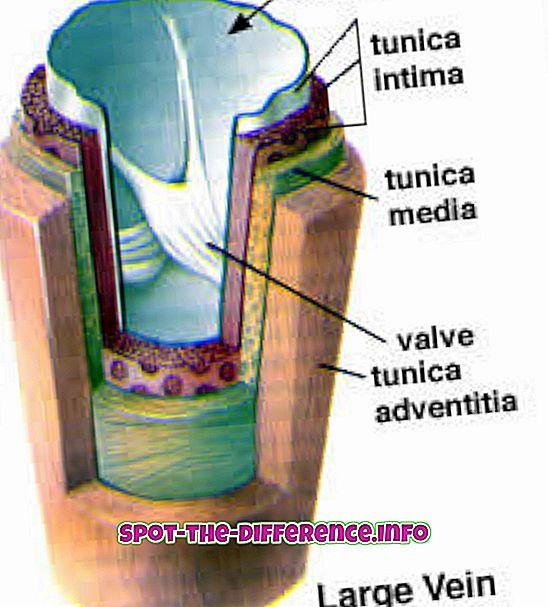 Forskel mellem nerve og vein