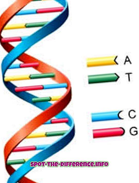 Diferença entre DNA e genes