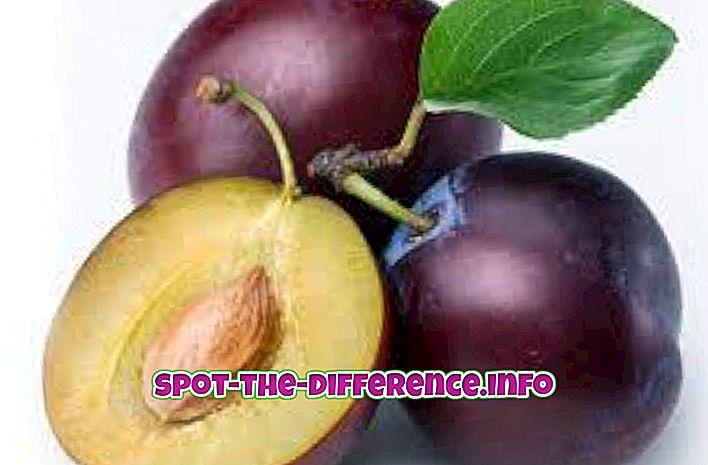 Perbedaan antara Plum dan Prune