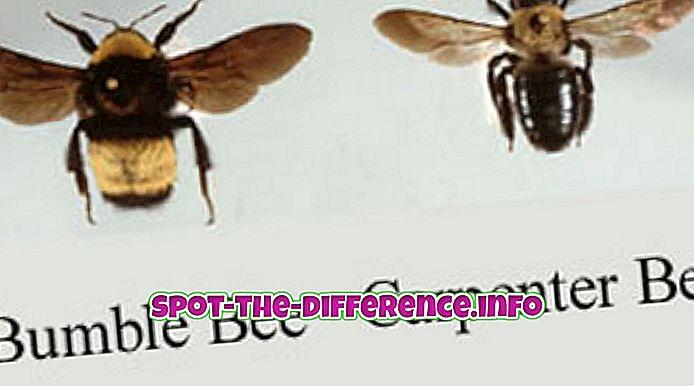 Unterschied zwischen: Unterschied zwischen Carpenter Bees und Bumblebees