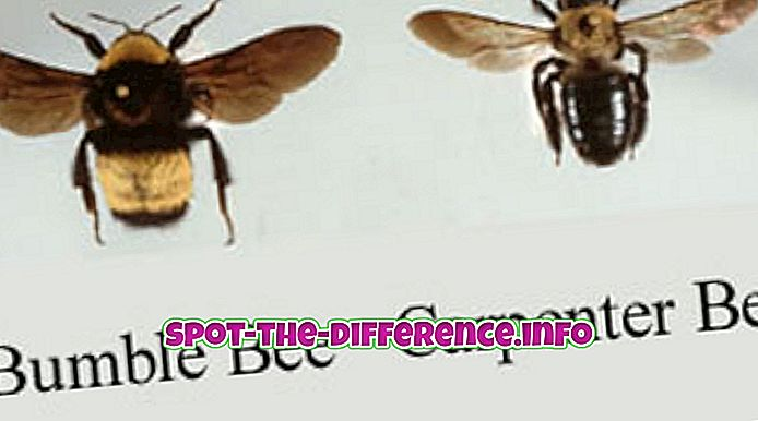 Rozdiel medzi tesárske včely a čmeliaky