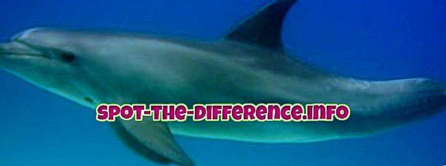 Skillnad mellan delfiner och tumlare