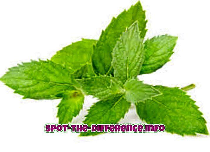 ความแตกต่างระหว่าง: ความแตกต่างระหว่าง Spearmint และ Peppermint