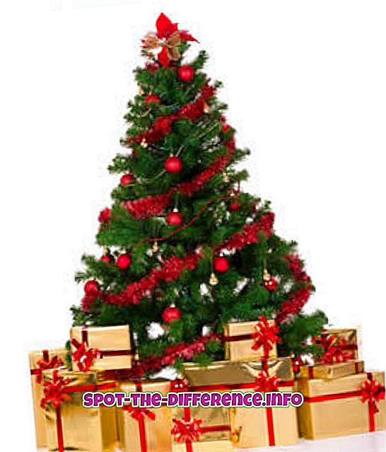 クリスマスツリーとパインツリーの違い