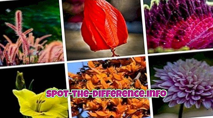 rozdíl mezi: Rozdíl mezi flórou a faunou