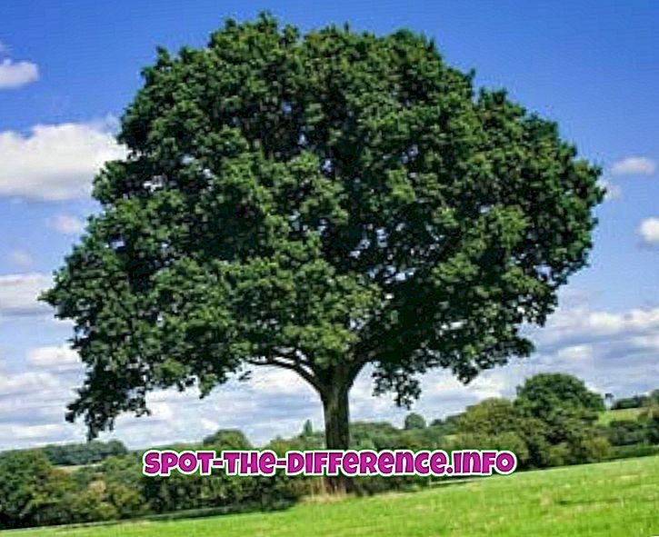 との差: 木と植物の違い