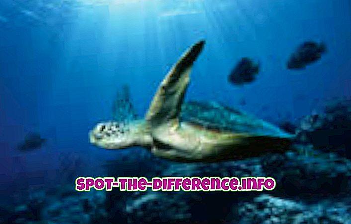 разлика између: Разлика између океана и мора