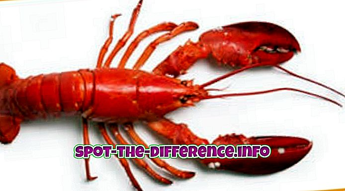 Differenza tra Lobster e Yabby