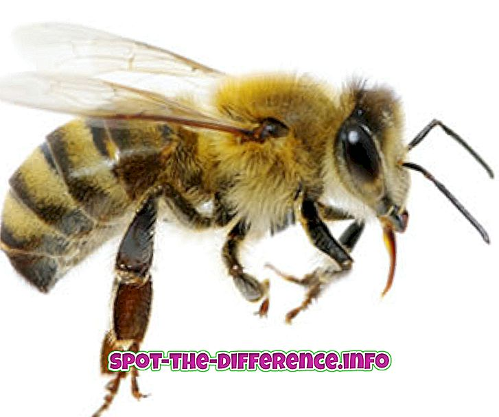 Differenza tra Bee and Wasp