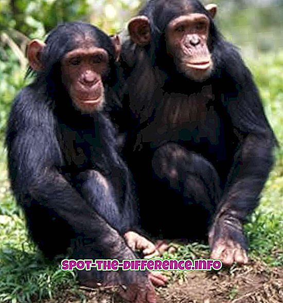 Unterschied zwischen: Unterschied zwischen Affen und Gorilla