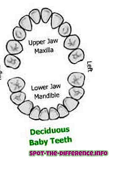 ความแตกต่างระหว่างฟันน้ำนมกับฟันแท้