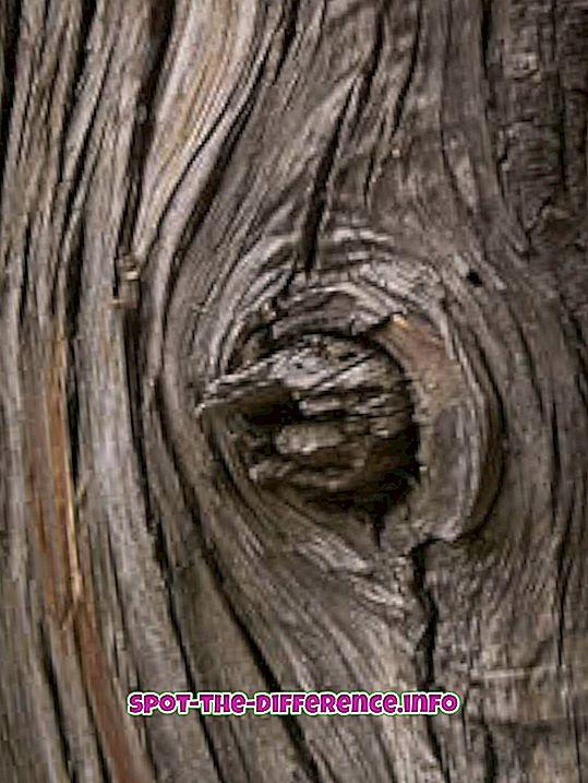разлика између: Разлика између бамбуса и дрвета
