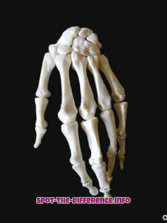 ความแตกต่างระหว่าง: ความแตกต่างระหว่างกระดูกและกระดูกอ่อน