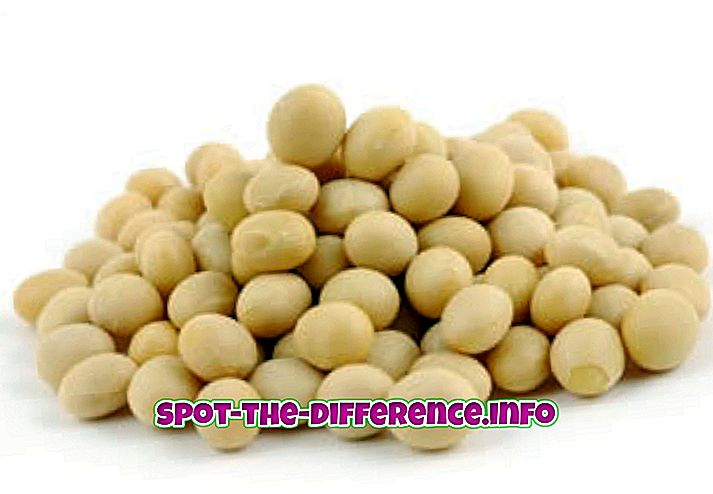 Unterschied zwischen: Unterschied zwischen Soja und Soja