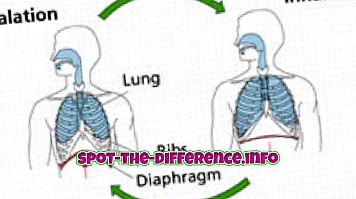 forskjell mellom: Forskjell mellom åndedrettsvern og respirasjon