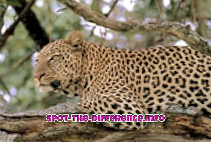 Látják-e a macskák sötétben és hogyan? - Gyulladás