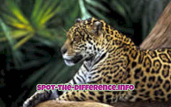 Rozdiel medzi Jaguarom a Leopardom