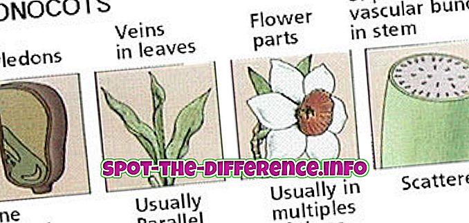 forskjell mellom: Forskjell mellom monocots og dikotiker