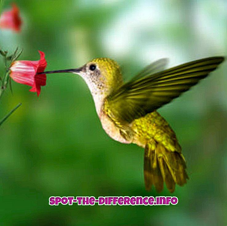 diferencia entre: Diferencia entre néctar y polen.