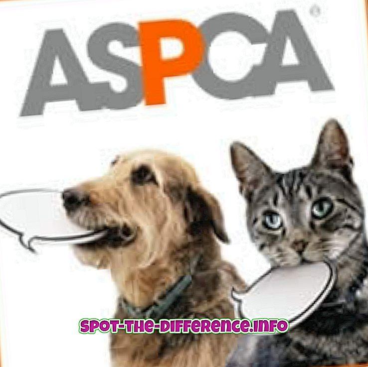 ero: ASPCA: n ja HSUS: n välinen ero