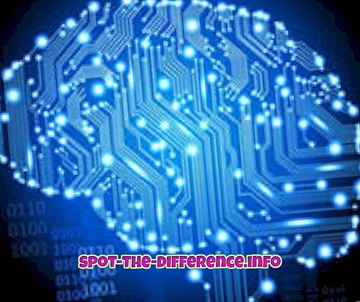 différence entre: Différence entre cerveau, esprit et mental
