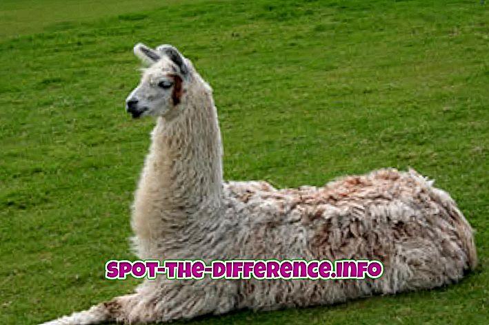 rozdíl mezi: Rozdíl mezi lamy a alpaky
