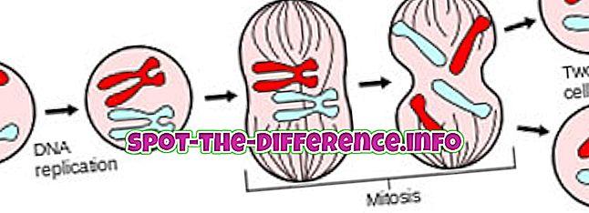 atšķirība starp: Starpība starp mitozi un amitozi