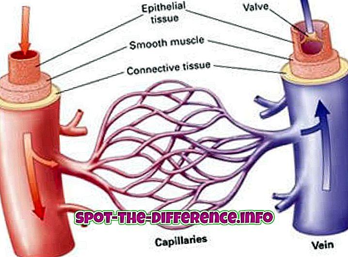 ความแตกต่างระหว่าง: ความแตกต่างระหว่างหลอดเลือดแดงและหลอดเลือดดำ