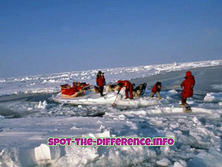 różnica pomiędzy: Różnica między biegunem północnym a biegunem południowym