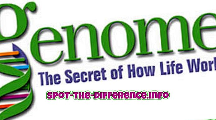 Rozdiel medzi genómom a DNA