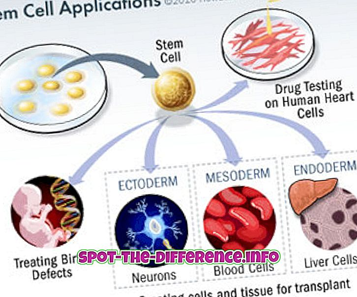 разлика между: Разлика между стволовите клетки и прогениторната клетка
