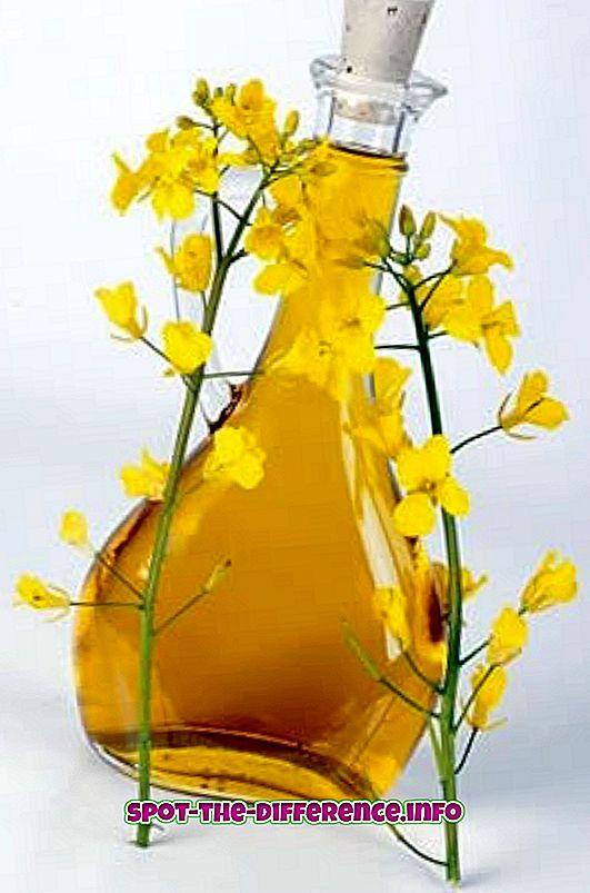 różnica pomiędzy: Różnica między olejem rzepakowym a olejem szafranowym