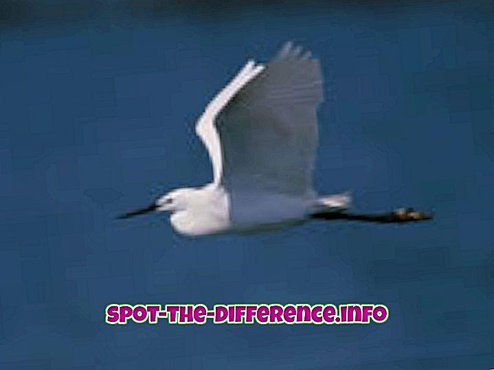 Verschil tussen vliegen en zweefvliegen