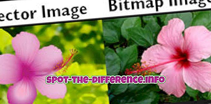 vahe: Bitmapi ja vektori erinevus