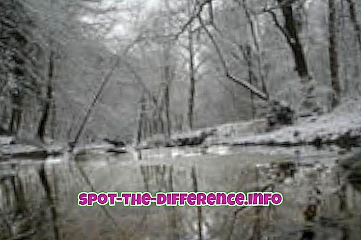 forskjell mellom: Forskjellen mellom vinter og vår