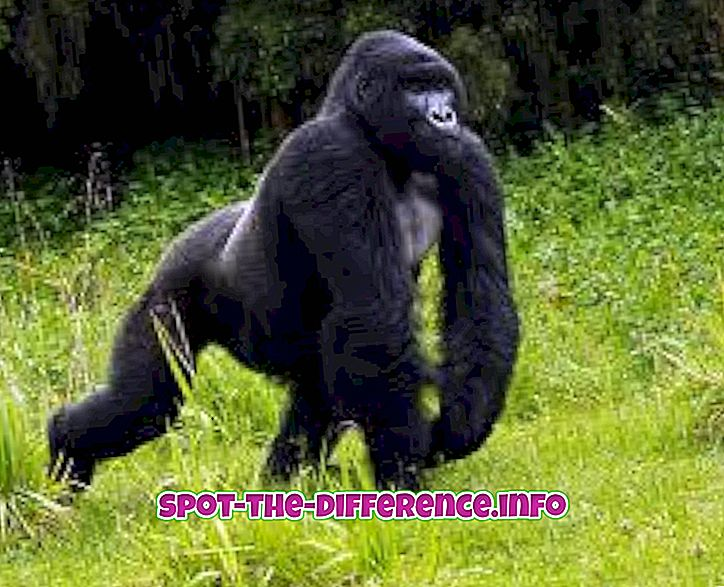 Unterschied zwischen: Unterschied zwischen Gorilla und Guerilla