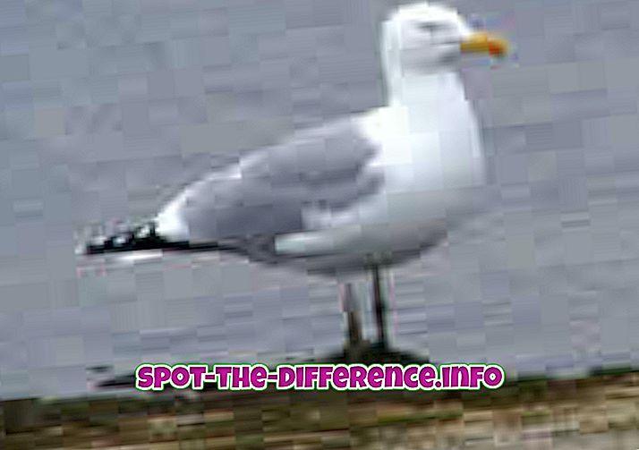ความแตกต่างระหว่าง Gull และ Albatross