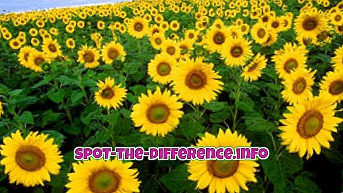 Rozdiel medzi rastlinami a zvieratami