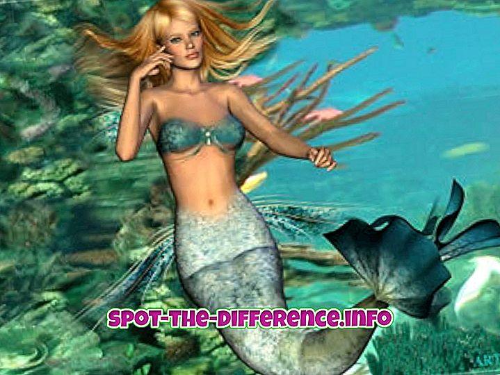 ความแตกต่างระหว่าง Mermaid และ Siren