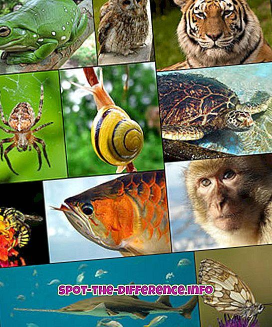 Zooloogia ja geoloogia erinevus