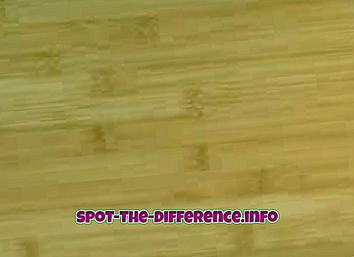 Bamboo ja roo erinevus