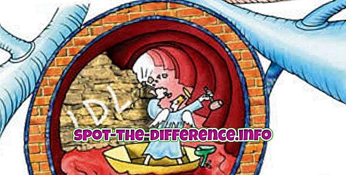 Unterschied zwischen: Unterschied zwischen gutem und schlechtem Cholesterin