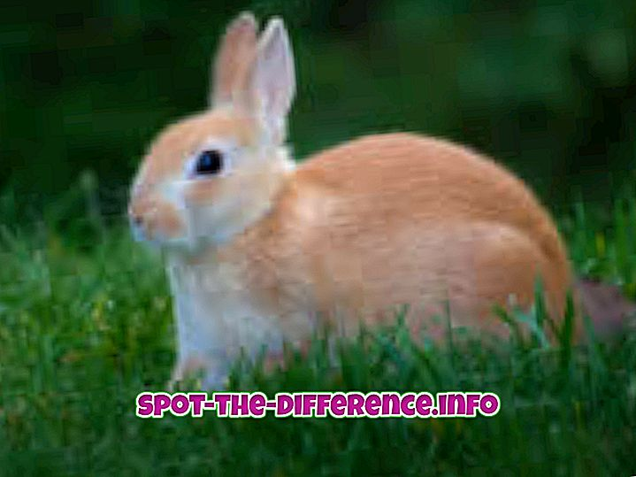 diferencia entre: Diferencia entre conejo y conejo
