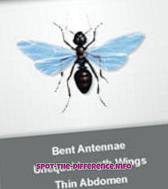 ความแตกต่างระหว่าง: ความแตกต่างระหว่าง Flying Ants กับปลวก