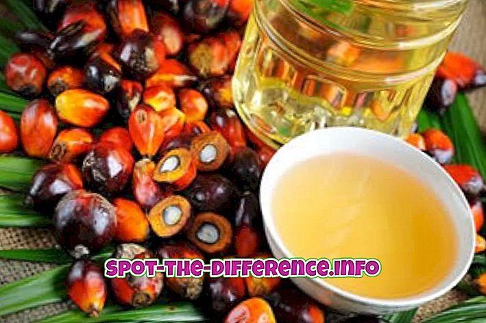 разлика између: Разлика између палминог уља и кокосовог уља